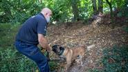 Politie wil extra honden in dienst