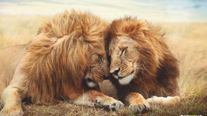 """""""In het dierenrijk is homoseksualiteit doodnormaal"""""""