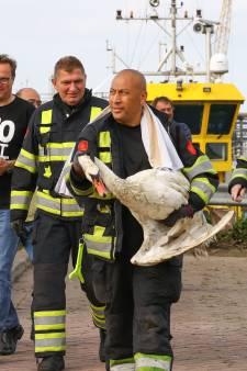 Brandweer redt zwaan met gebroken vleugel