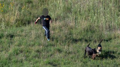 Reekalfje doodgebeten door twee loslopende honden in Genk voor ogen van fotograaf