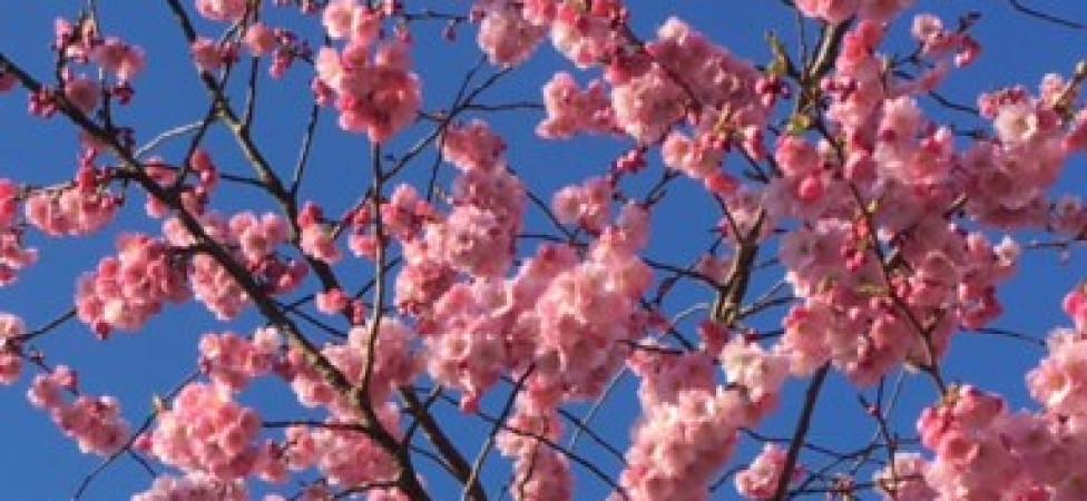 Mijmeren op een lentedag: waarom al dat Europa?