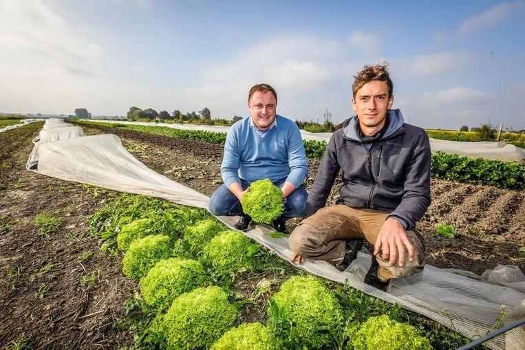 Kok Pieter De Smet en bioboer Lieven Devreese bij de sla op de groentenkwekerij van het ziekenhuis.