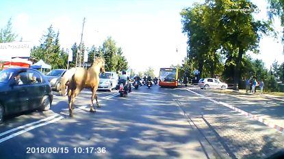 Paard verschijnt plots op de weg en loopt motorrijder omver