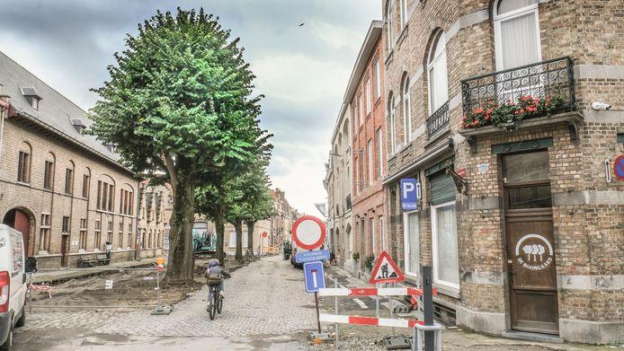 De vier mooie lindebomen in de Boomgaardstraat.