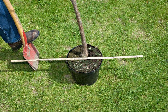 Het plantgat zou driemaal zo breed moeten zijn als de kluit van de boom die je gaat planten.