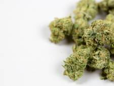 Gros succès pour un calendrier de l'avent au cannabis