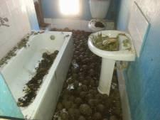 Meer dan 10.000 bedreigde schildpadden ontdekt in huis in Madagaskar