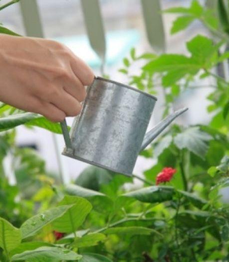 We moeten de tuintegels inruilen voor planten, maar sproeien mag dan weer niet...