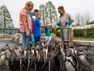 Ophokplicht voor alle pluimvee, ook ZOO en Planckendael sluiten vogelverblijven