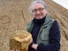 """Schat aan fossielen ligt voor het grijpen na doortocht van stormen Ciara en Dennis: """"Antwerpen is één groot walvissenkerkhof"""""""