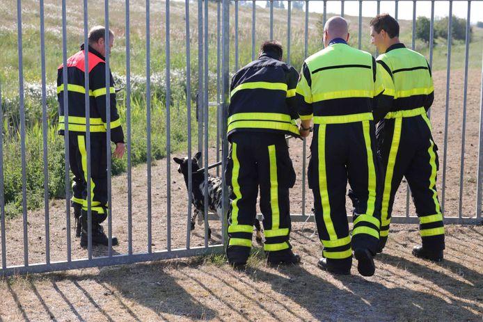 Schaap uit sloot aan Zomerdijk gered in Waalwijk.