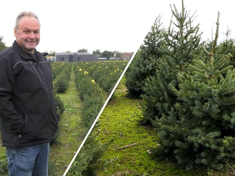 Massaal aan de kerstboom vanwege corona: 'Halen de gezelligheid in huis'