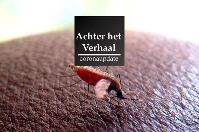 Een mug die malaria draagt prikt een onderzoeker