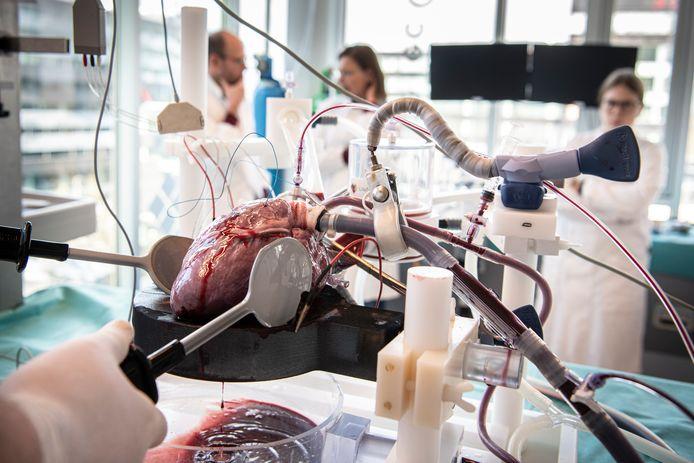 Om het hart nog verder op gang te helpen dient hoofdonderzoeker Sjoerd van Tuijl het hart een elektrische schok toe om de hartspiercellen te 'resetten'.