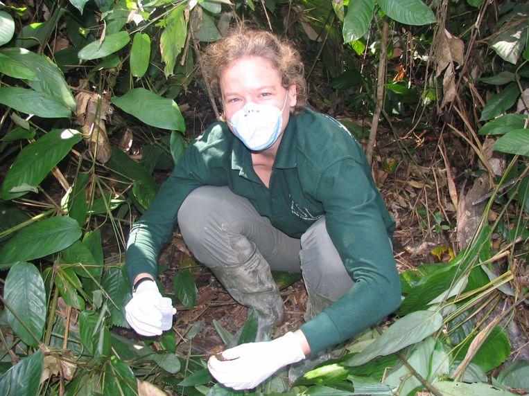 Onderzoek in een gorillanest, 2006. Beeld Prive album