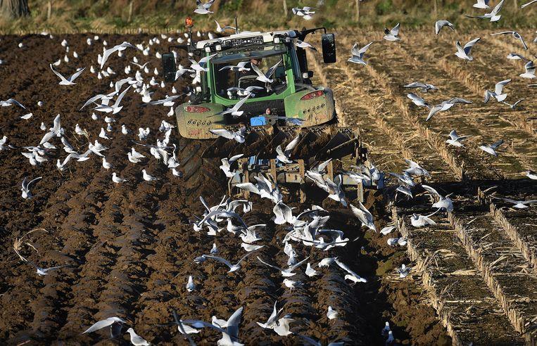 Boeren zouden minder moeten ploegen, want uit de opengewerkte bodem verdwijnt koolstof weer in de lucht. Beeld Marcel van den Bergh, HH