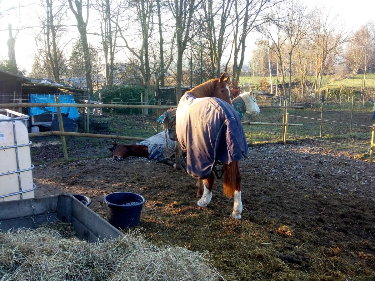 De paarden staan er wat verweesd bij.