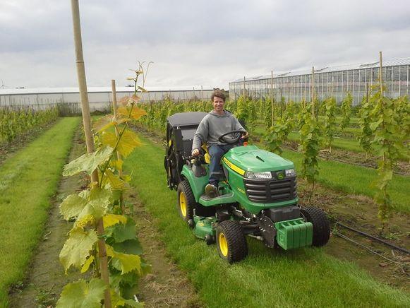 Steve op de tractor tussen de wijnstokken.