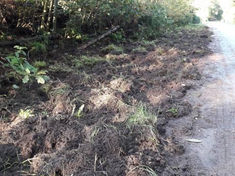 Wilde zwijnen in het dorp? Zo houdt Wiljan ze uit zijn tuin in Heerde