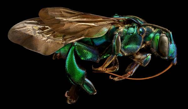 Een insect gemaakt uit 10.000 kleine foto's