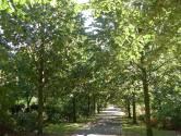 Lindenlaan Arboretum wordt 'pad van herinnering'