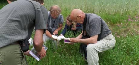 Groeiende 'bloemkracht' op de Rucphense zandgronden
