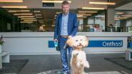 """'Neem Je Hond Mee Naar Het Werk'-dag: """"Tijdens lunchpauze even ravotten met de viervoeter"""""""
