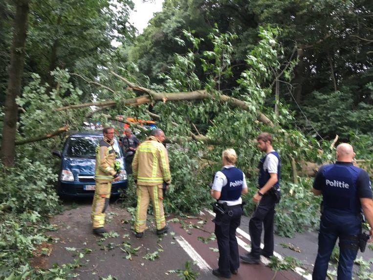De brandweer had enkele uren werk met het ruimen van de omgevallen boom.