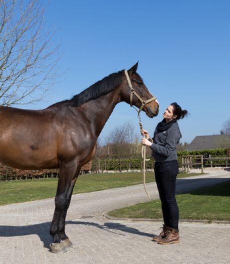 Vete tussen manege Bartels en ex-topmodel Engel duurt voort: deskundige moet oordelen over geblesseerd paard