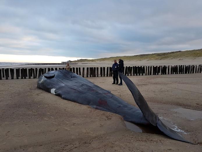 De aangespoelde walvis