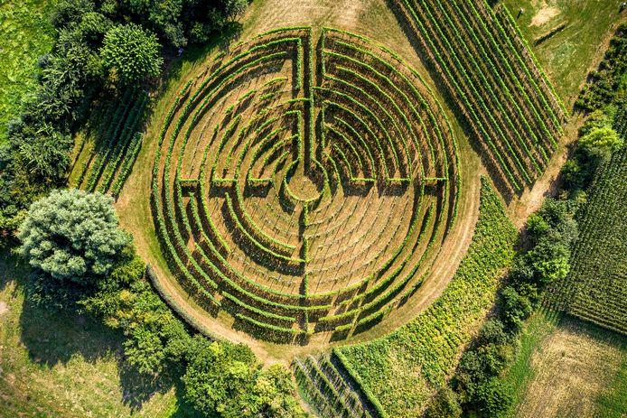 Nederland,  Schijndel, de wijngaard van Winery and Herbs met eigenaar Geert Hermans