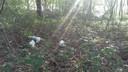 De gevonden konijnen in Lievelde.