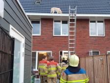 Brandweer rukt uit: kat in de boom? Nee, een hond in de dakgoot
