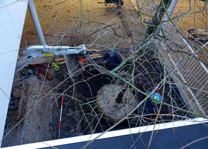 De nieuwe eiken van bovenaf gezien op de bodem van de parkeergarage.
