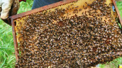 """Limburg houdt van zijn bijen: van 750 naar ruim 1.100 imkers in vijf jaar. """"En toch, bezint eer ge begint"""""""