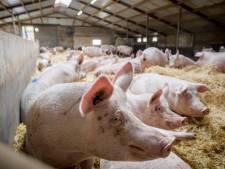 Open dag duurzame varkensstal Horssen