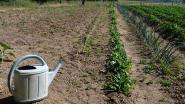 DNA! en Groen-sp.a stellen maatregelen rond oppompen van grondwater voor