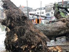 Boom valt op een rijdende auto in Dordrecht en enige visarenden-nest waarop gebroed werd verwoest