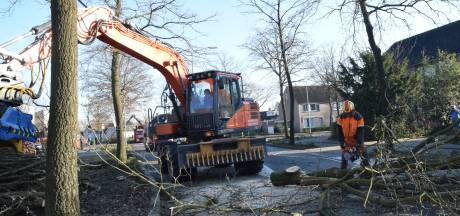 103 bomen geveld in de Guido Gezellelaan in Goirle