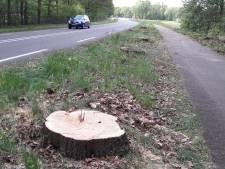 Gemeente Berkelland laat vijf eiken kappen langs ex-N18
