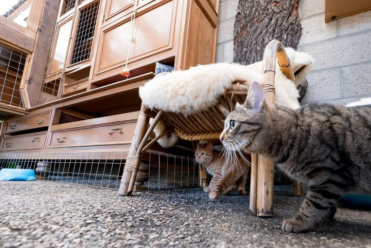 Katten In Het Nieuw Bij Dierenbescherming Mechelen In De