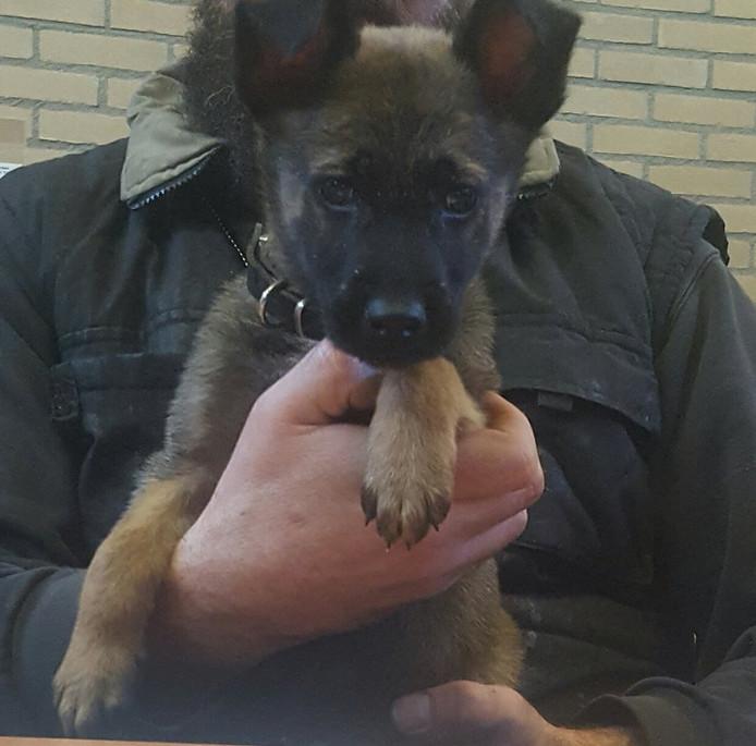 Bumper is de nieuwe aanwinst van de politie Rotterdam.