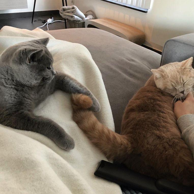 Katten Modest (links) en Vermeersch (rechts)