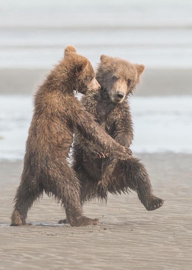 Ik zag twee beren, de tango leren...