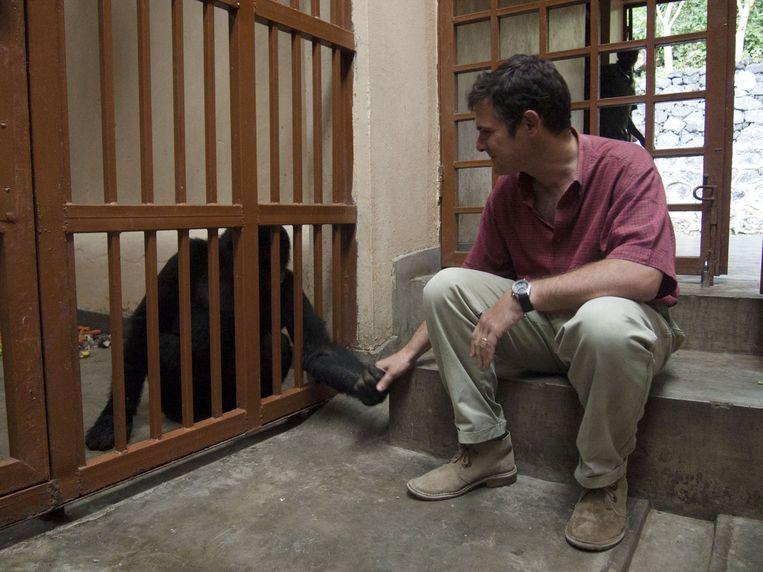 Emmanuel de Merode en een geredde verweesde berggorilla