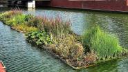 Verlaagde Leieboorden in Kortrijk krijgen drijvende tuin