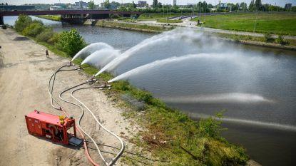 Bietenpulp bereikt Ringvaart: Gentse vissen ontsnappen aan ramp
