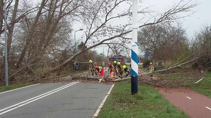 Een omgewaaide boom verspert de Ringbaan-West in Goes.