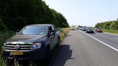 Nederlandse actievoerders laten edelherten los op autostrade