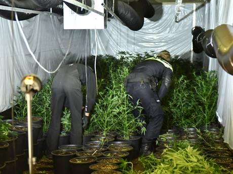 Hennepkwekerij achter luik in bedrijfspand in Alphen